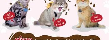 CAT LOVER 2019 Zipevent